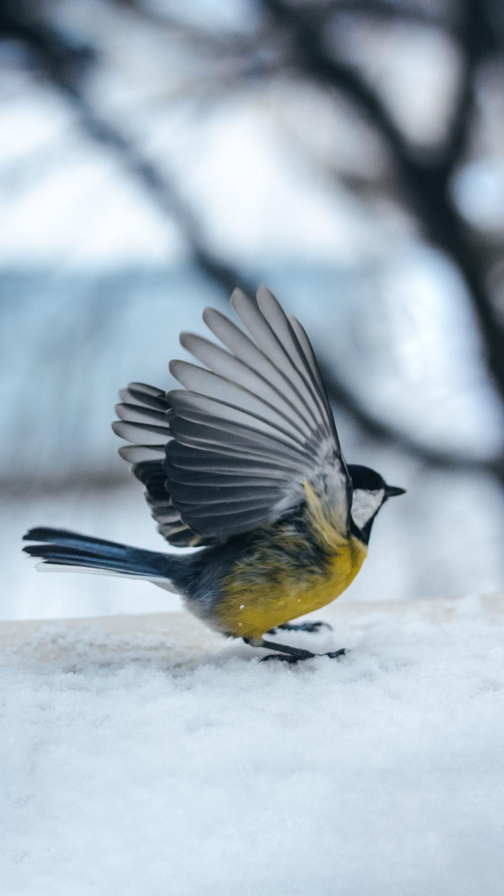 shallow focus photo of gray and yellow bird