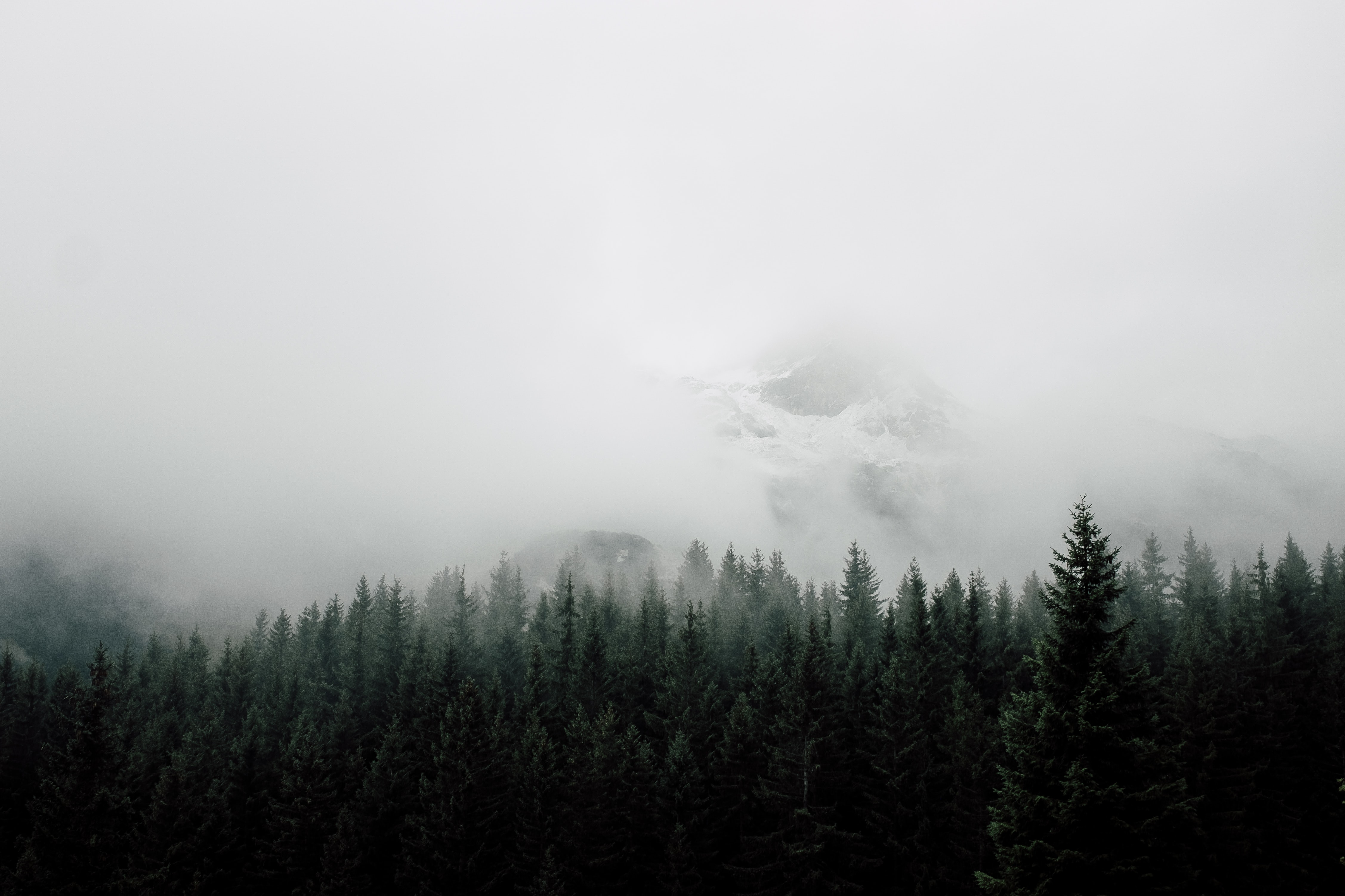 mist covering mountain and forest