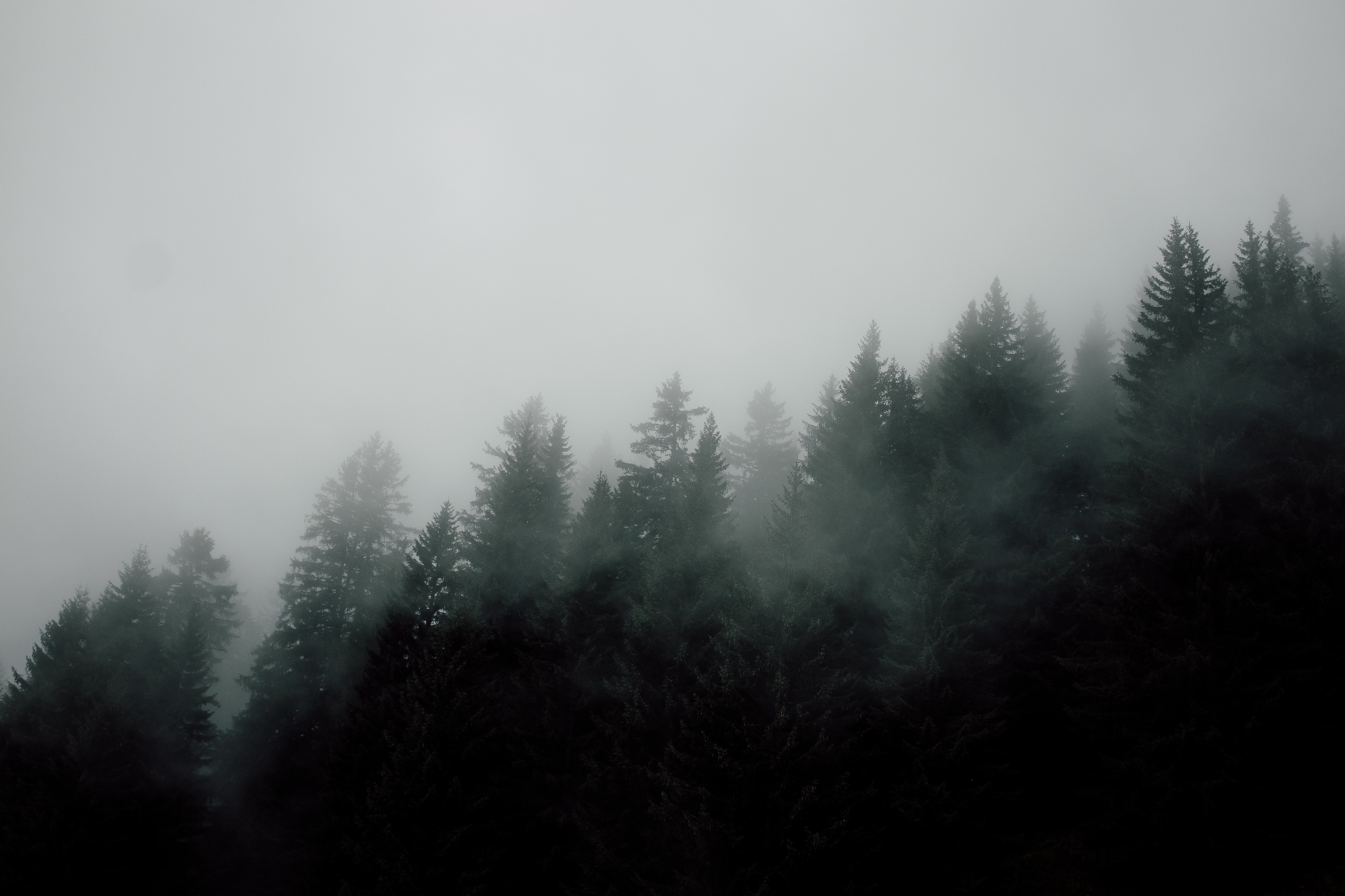 fog above forest during daytime