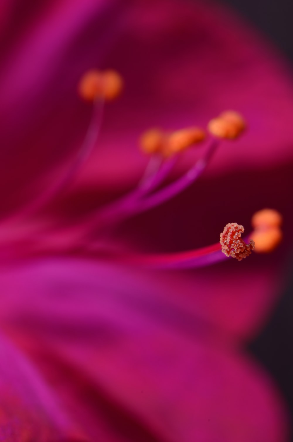 selective focus photography of pink textile