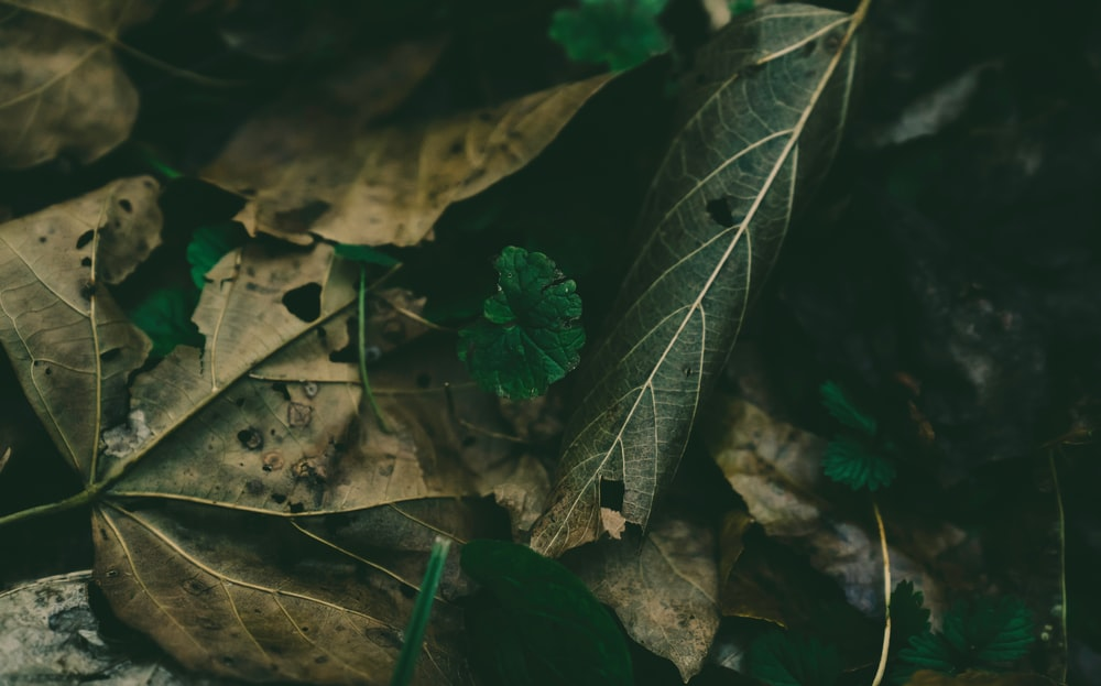 brown withered leaves during daytime