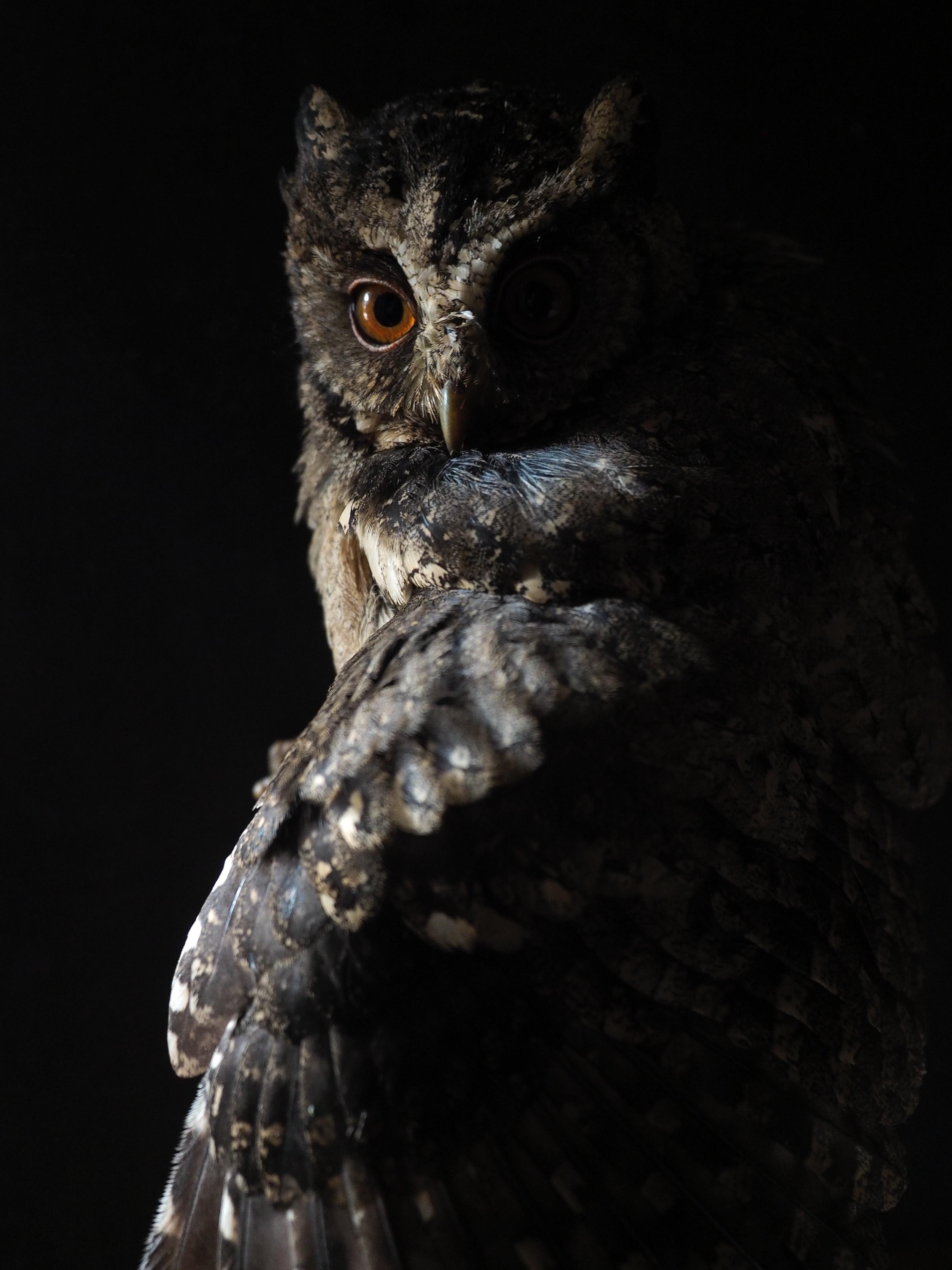 Owl Wallpapers Free Hd Download 500 Hq Unsplash