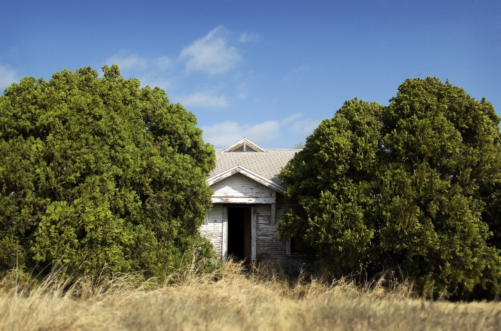 white tool shed between green trees