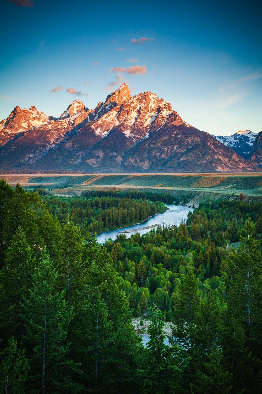 Zedge Wallpapers: Free HD Download