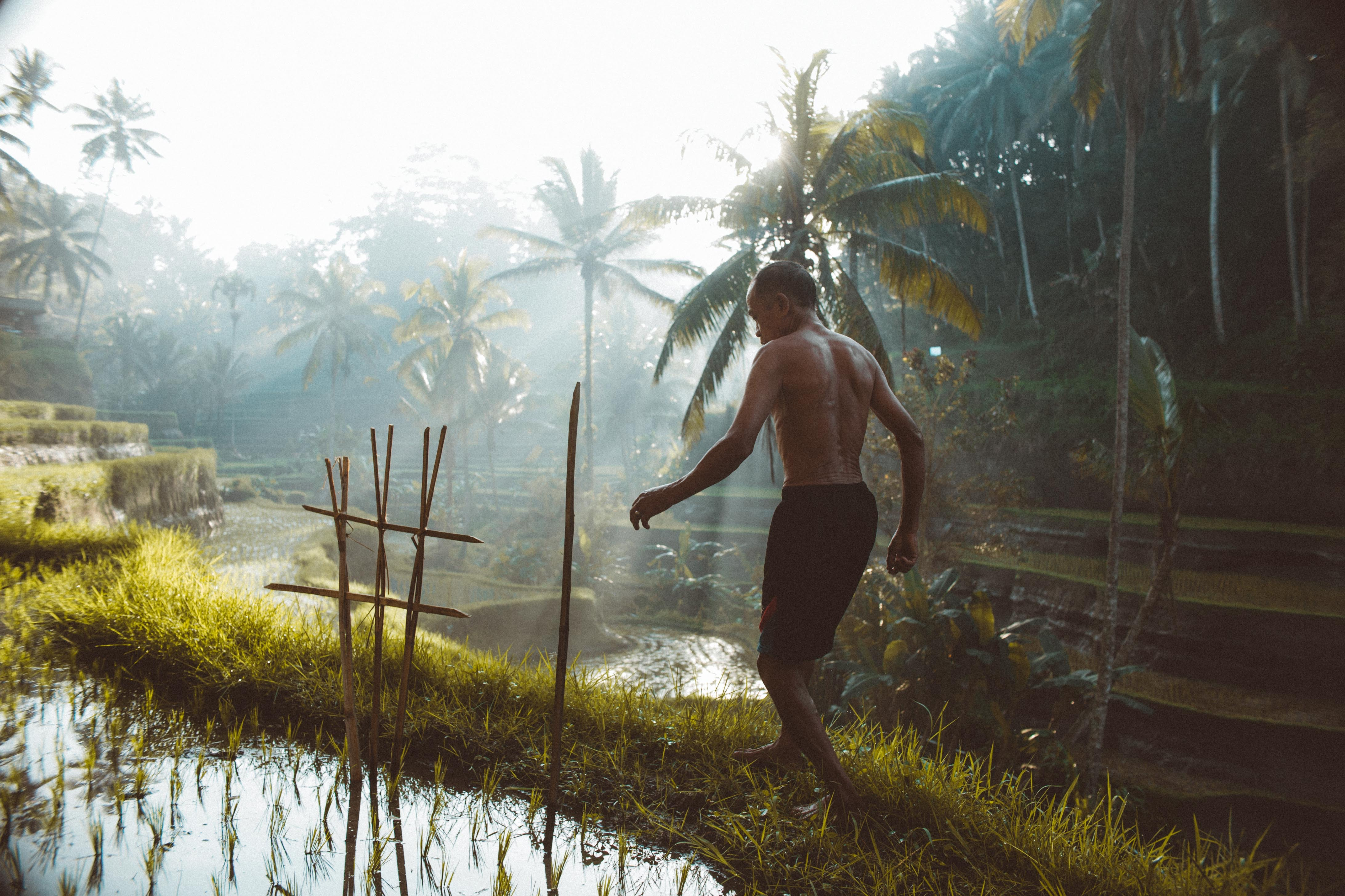 man walking on rice paddy