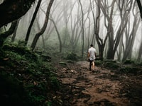 man walking on Forrest in mist
