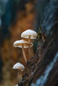 Mushrooms mushrooms stories