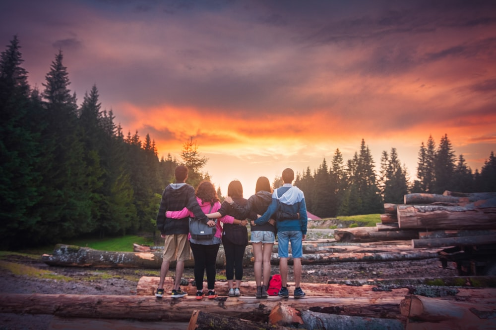 five person standing on wood logs looking at trees during golden hour