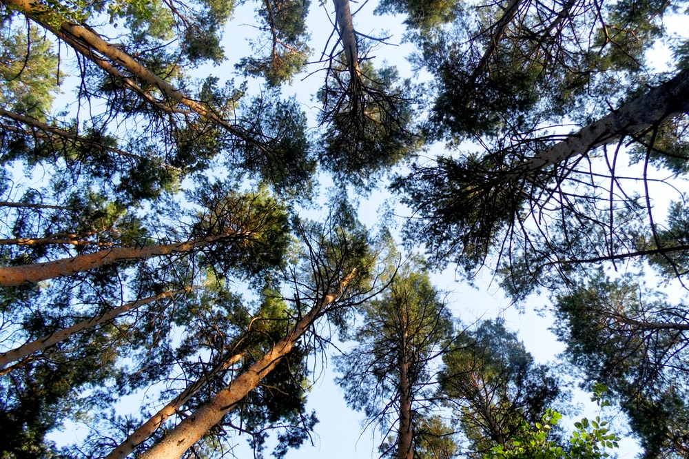 low-angle photography of trees during daytime