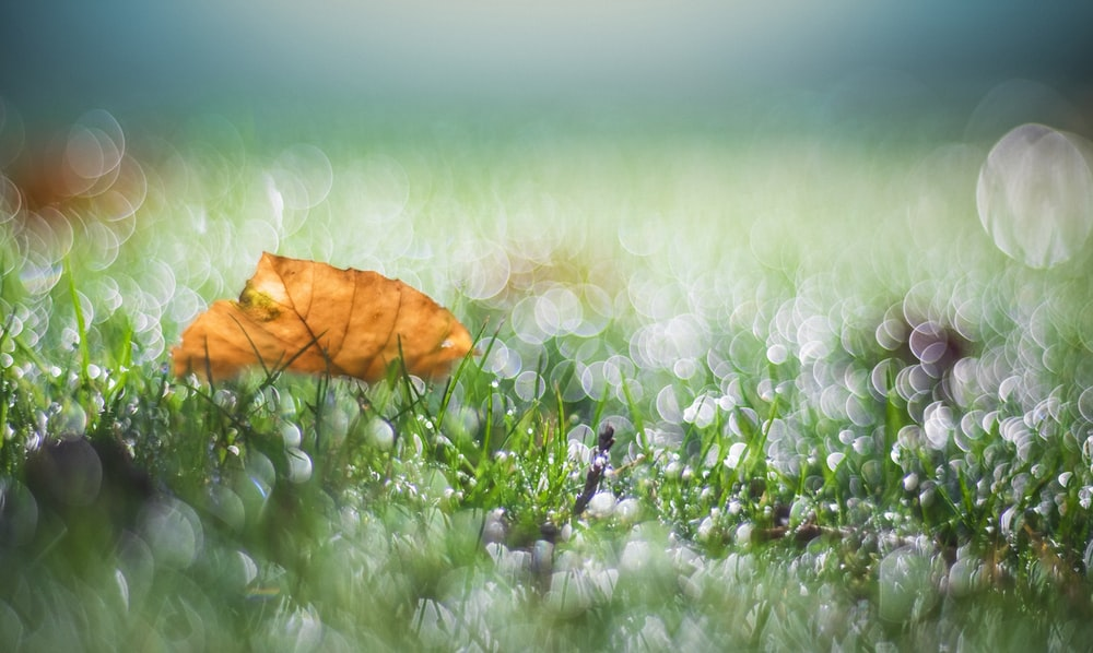 bokeh photography of withered leaf on grass