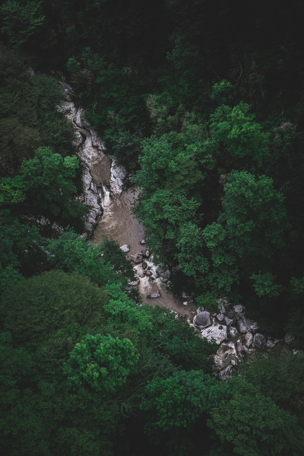 aerial photography of river in between trees at daytime