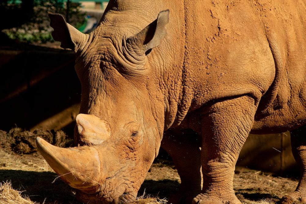 brown rhinoceros on brown field