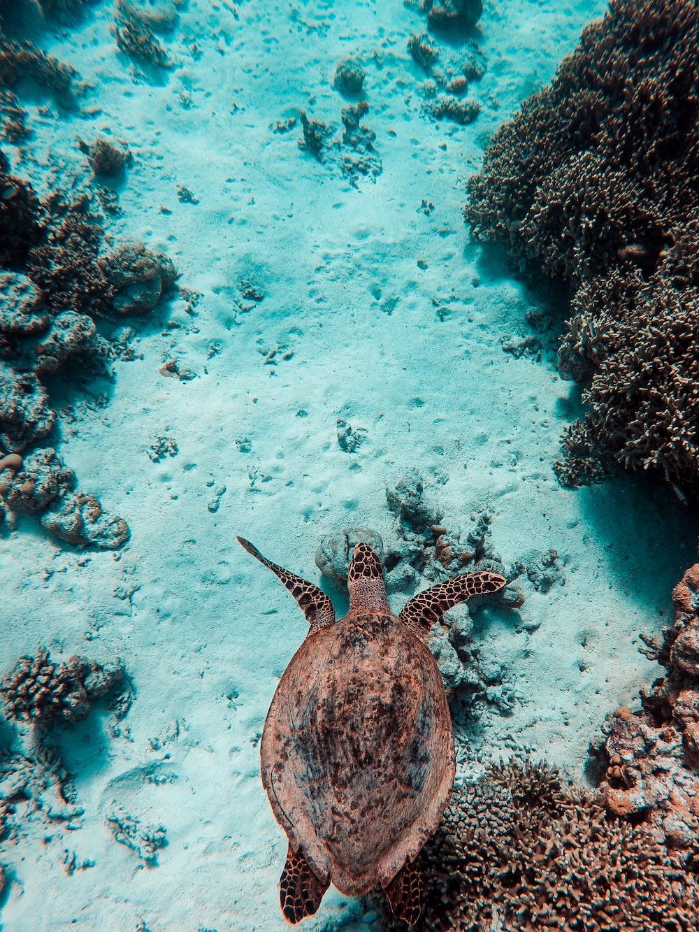 brown turtle at water