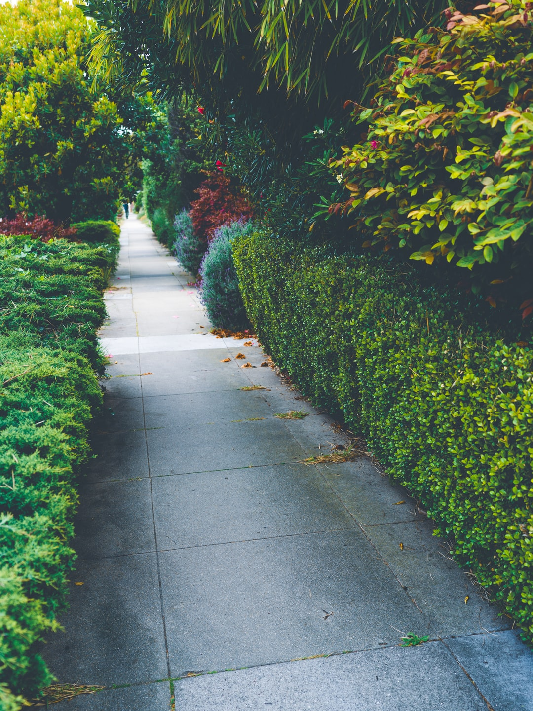 How often should I do landscaping maintenance in Anthem AZ Phoenix ?