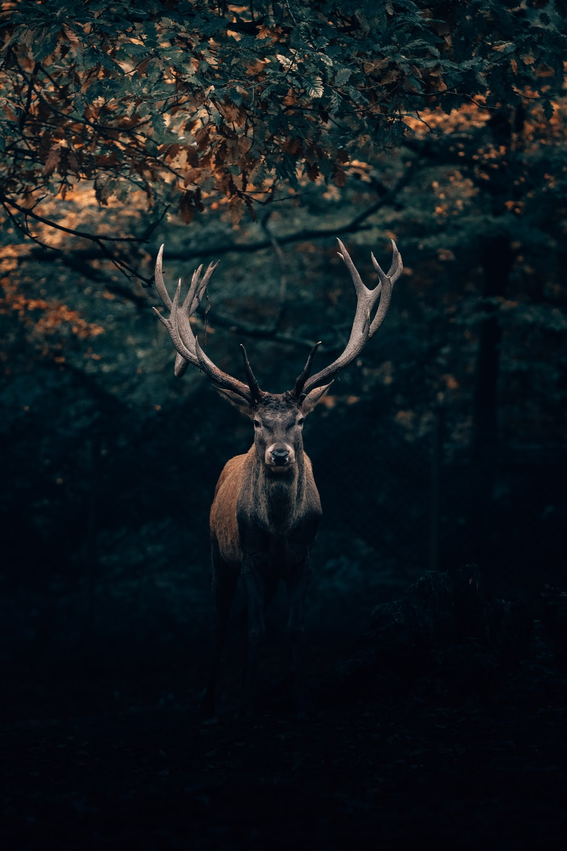 brown deer under tree