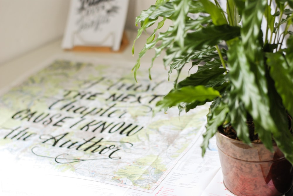 green indoor plant beside printed quote