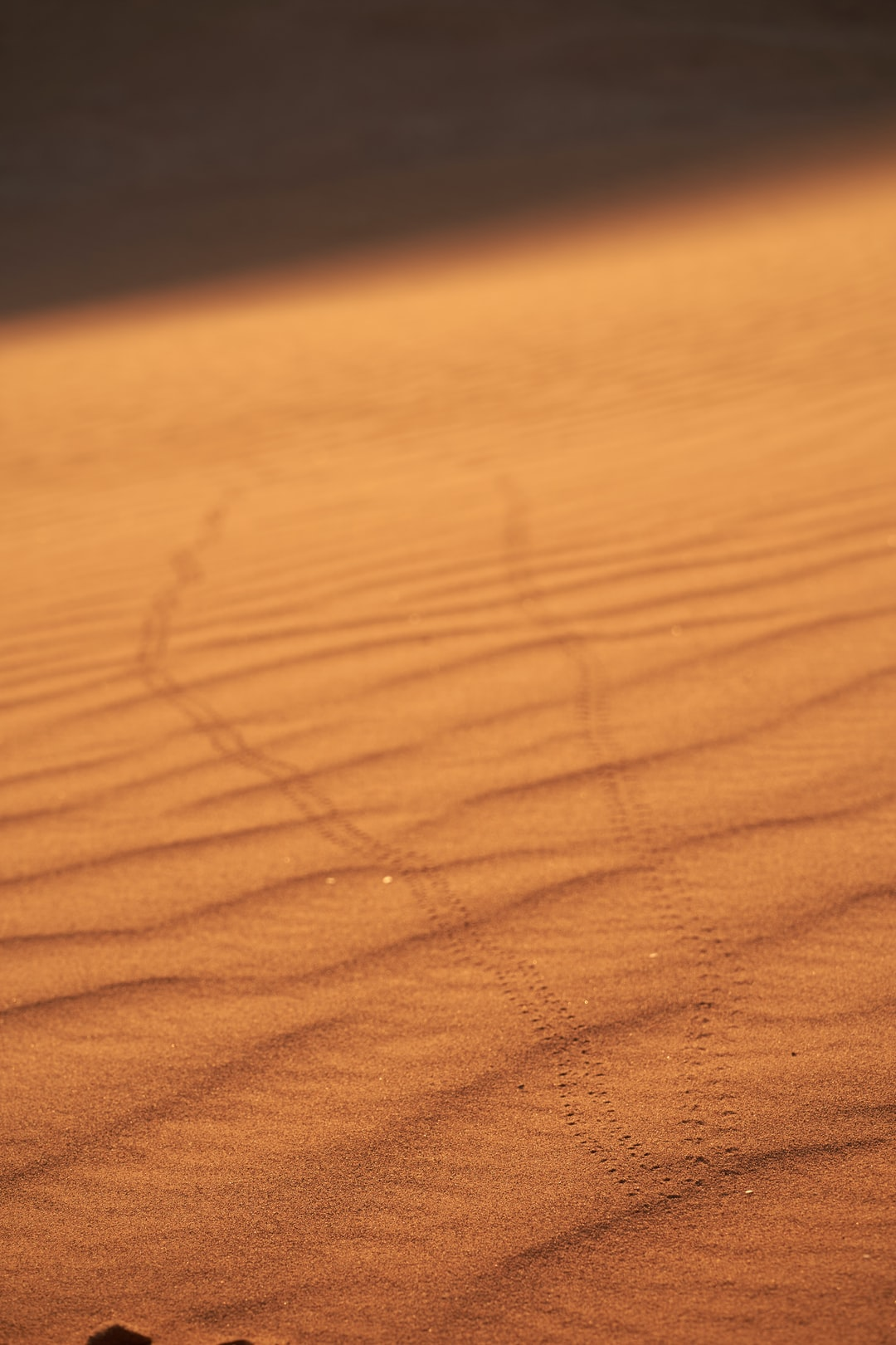 we have been sitting on a dune to see the sun set and a beetle came towards us when he recognize us he turned around and disappear´s. I was to slow to put the right lens on so I have just the picture of the track not the bug