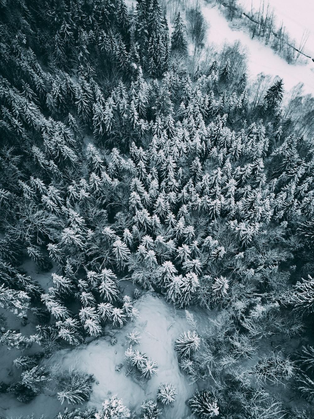 bird's eye view of trees