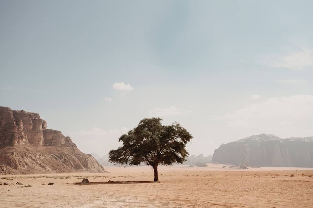 green-leafed tree on desert