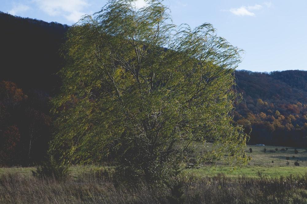 landscape of a tree on a field