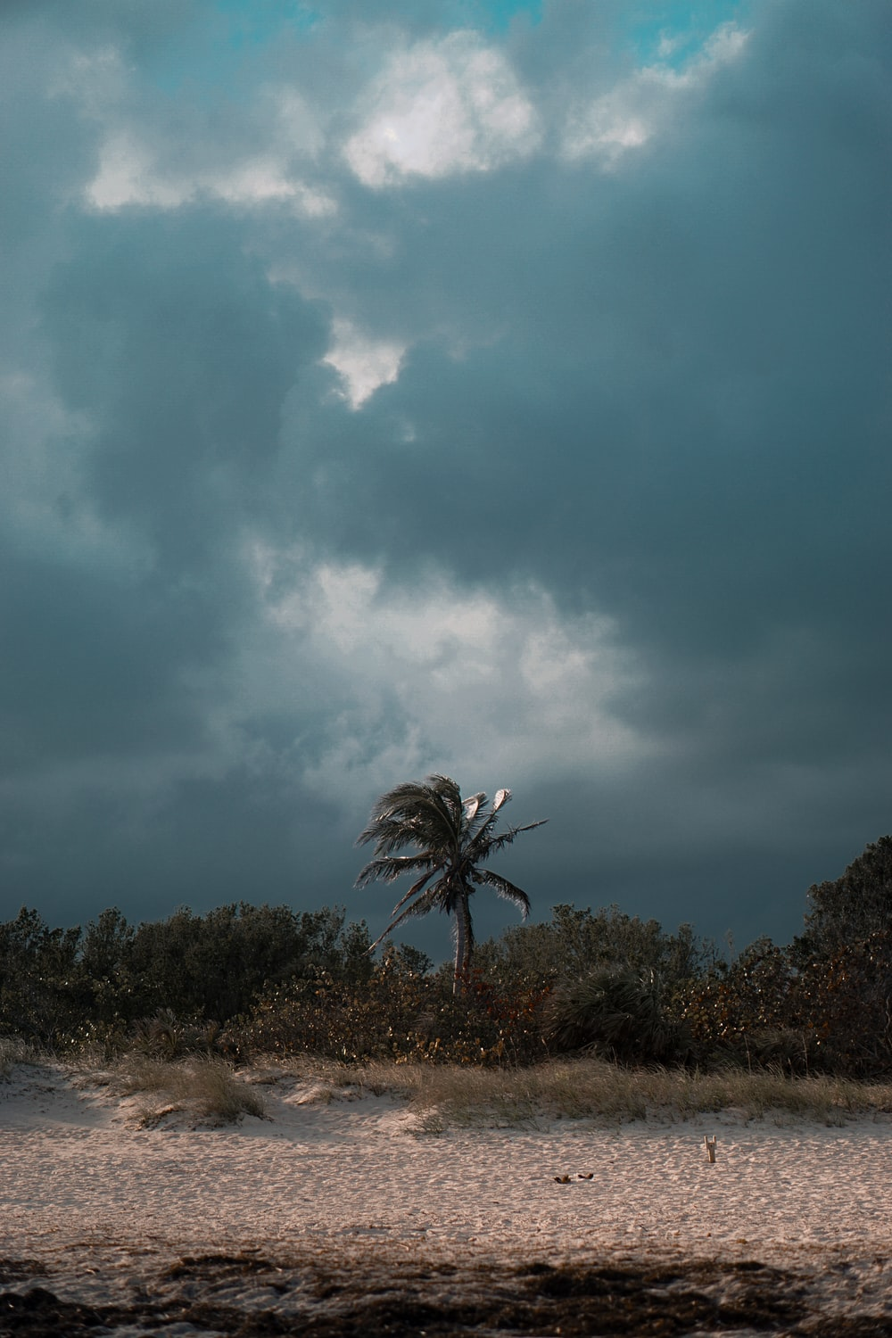 green coconut palm over other trees under gray clouds