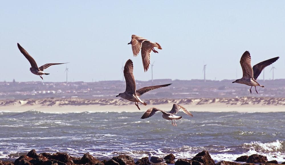 brown birds in flight over body of water