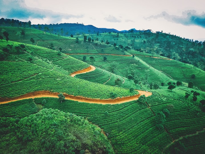 Best photo spots in the hill country of Sri Lanka