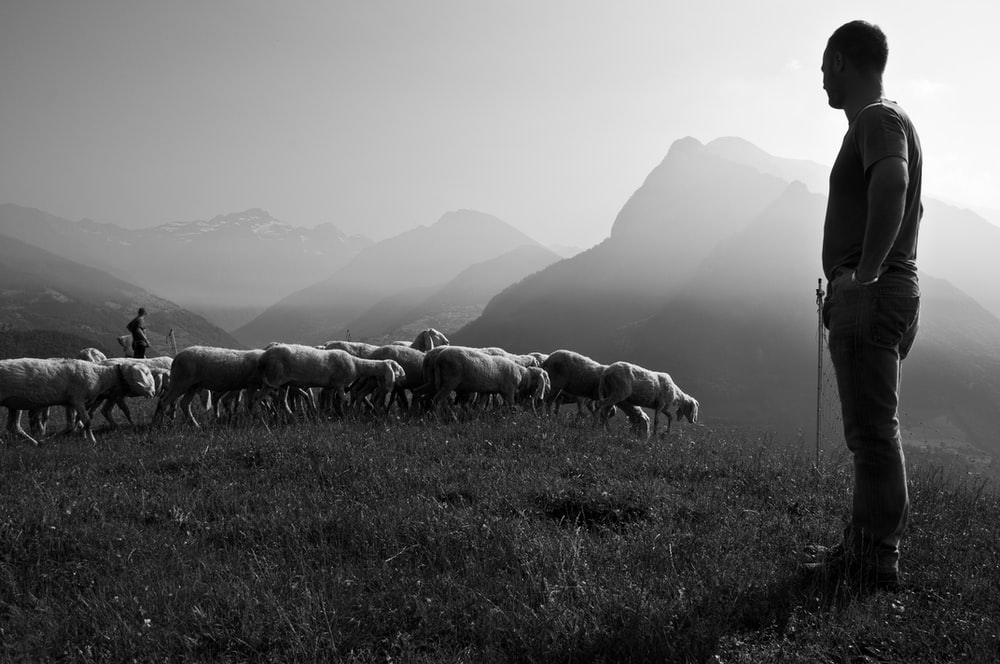 grayscale photo of man in front of animals