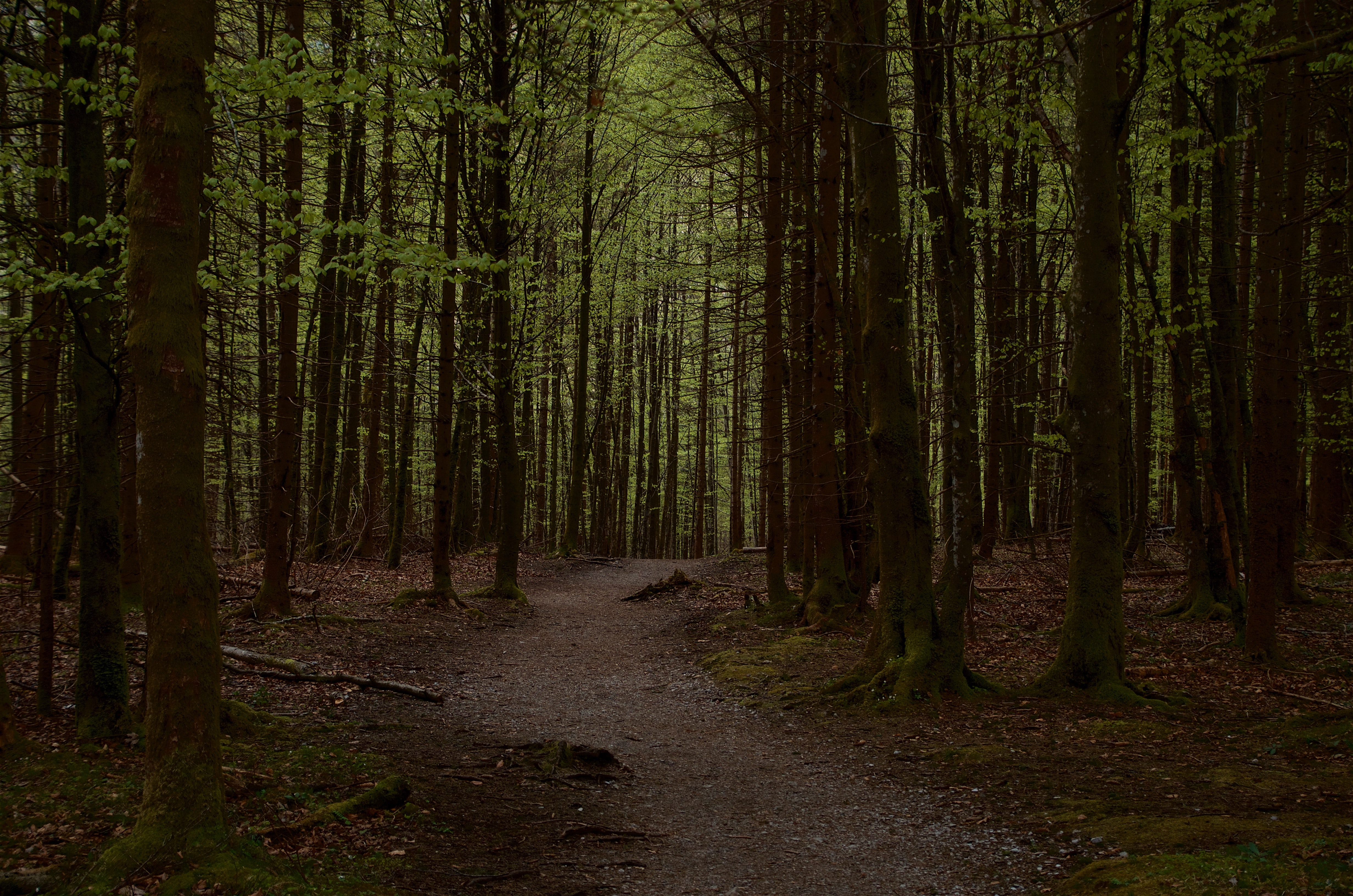 empty pathway in middle of woods during daytime