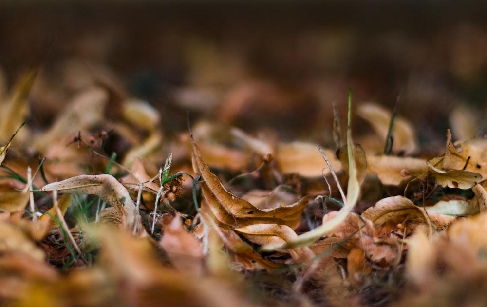 brown dried leaf