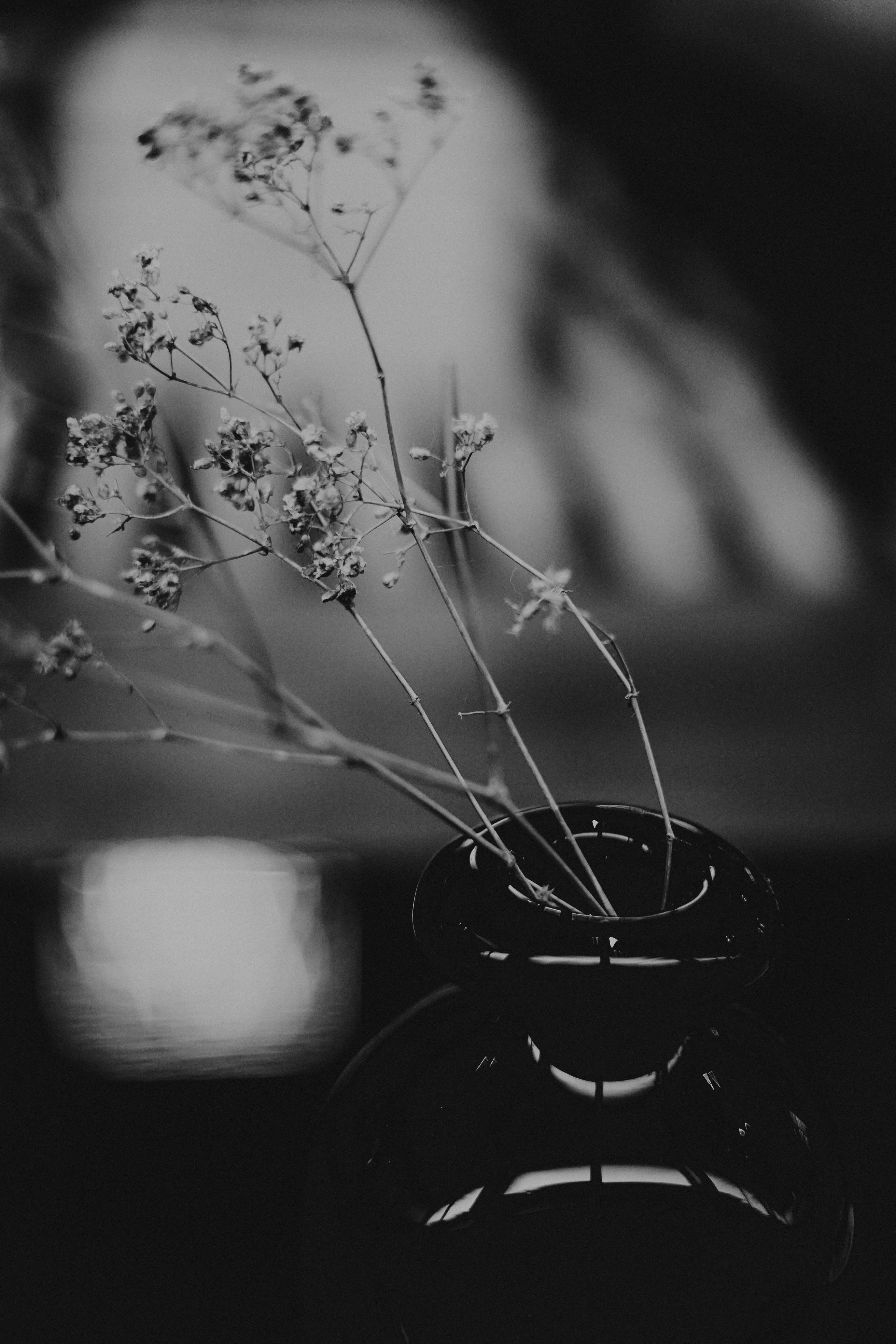 500 Black And White Flower Pictures Hd Download Free Images