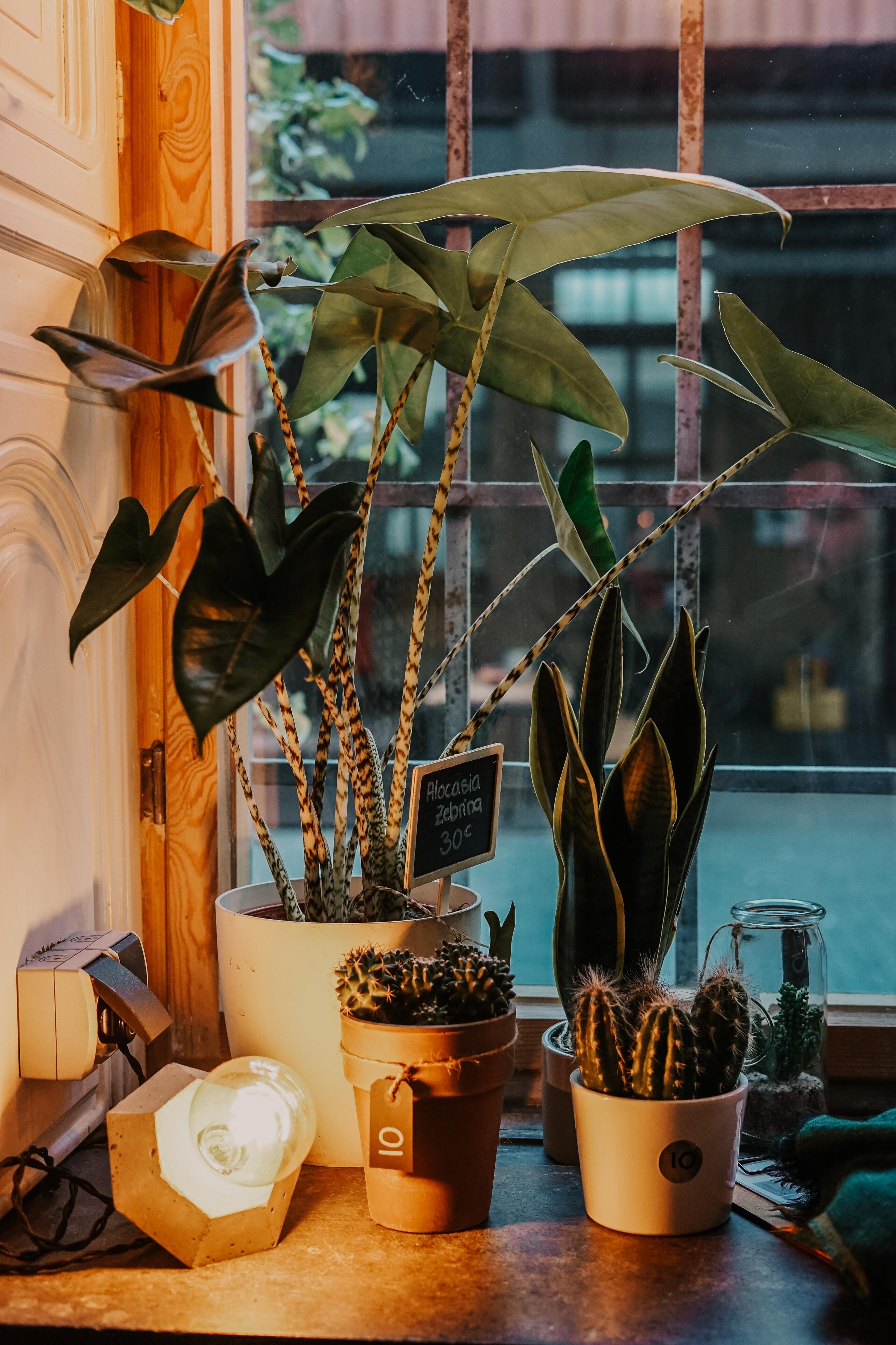 cactus and indoor plant near windowpane