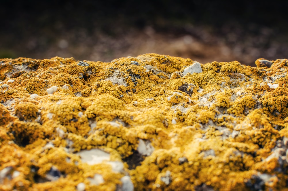 rocks covered with yellow moss