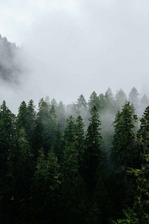 foggy green trees