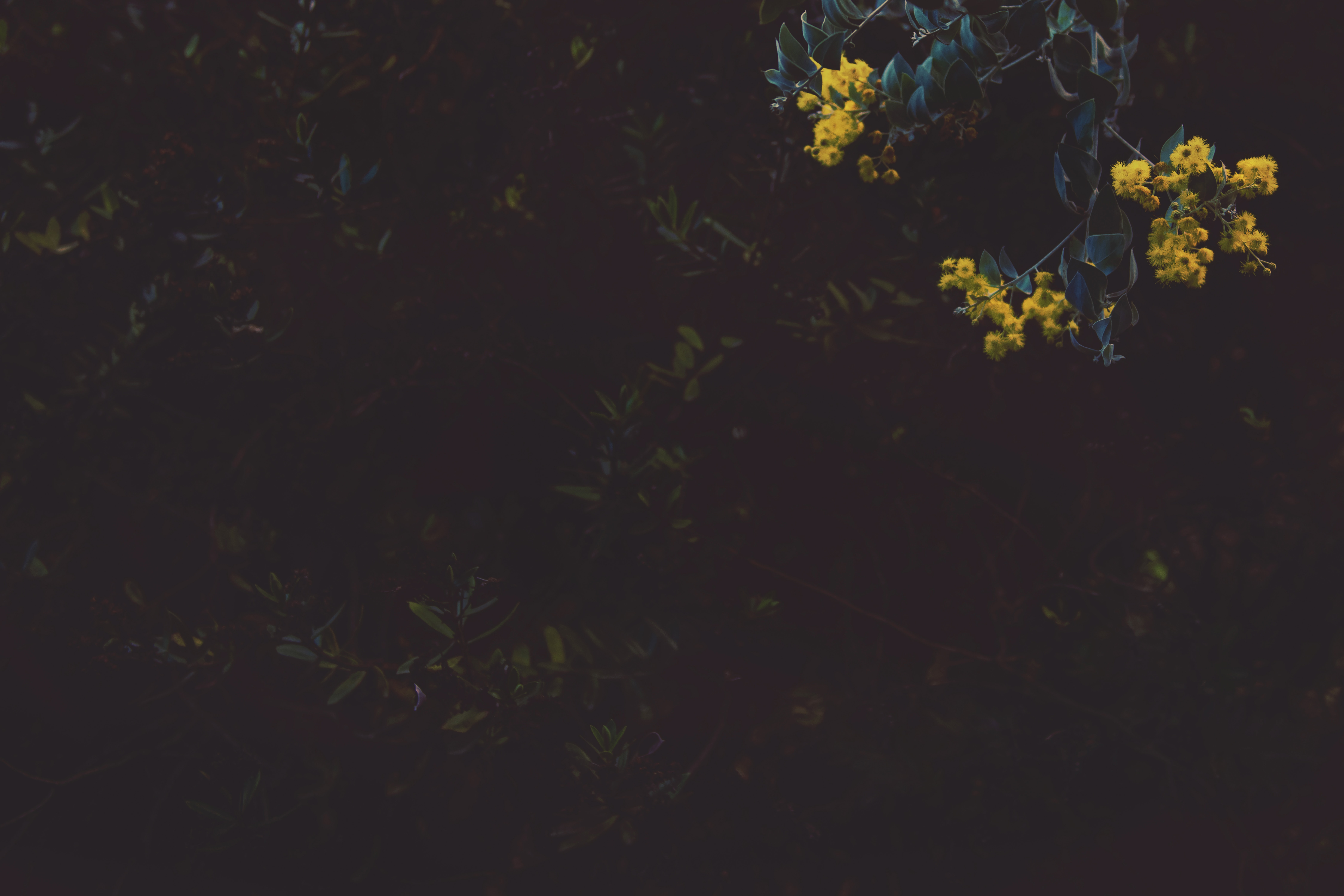 black and yellow floral textile