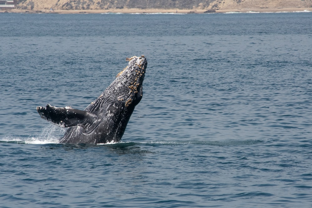 black whale during daytime