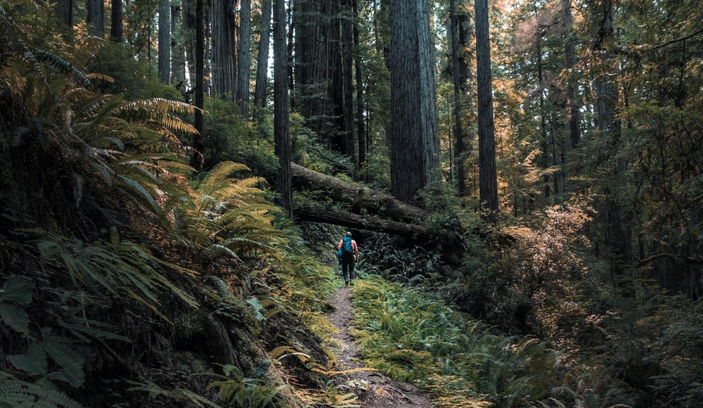 person walking in the middle of forest
