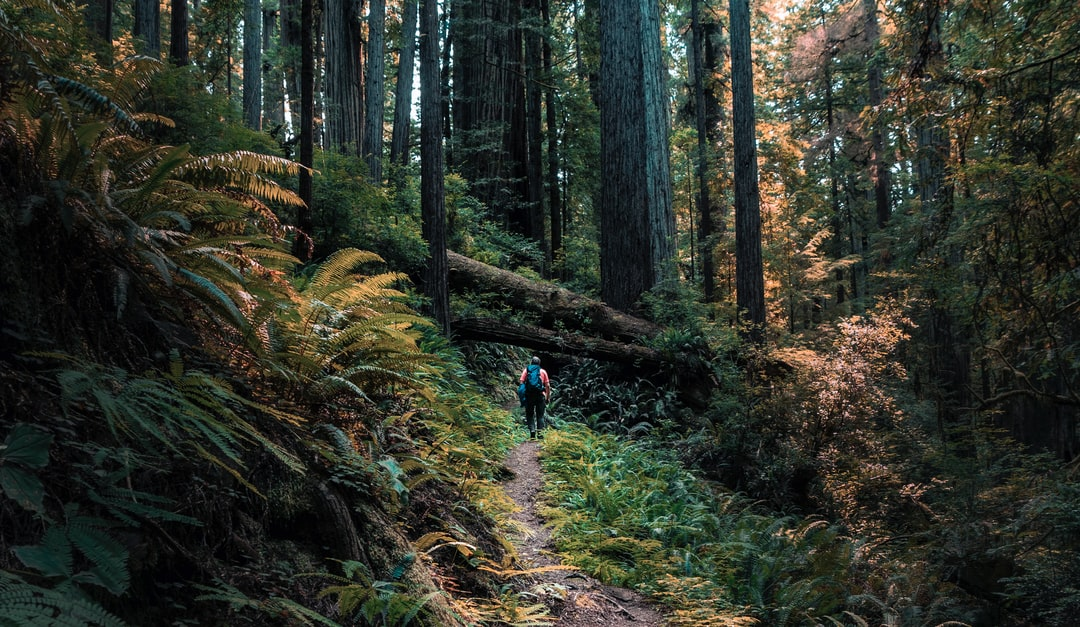 Redwood Hiker