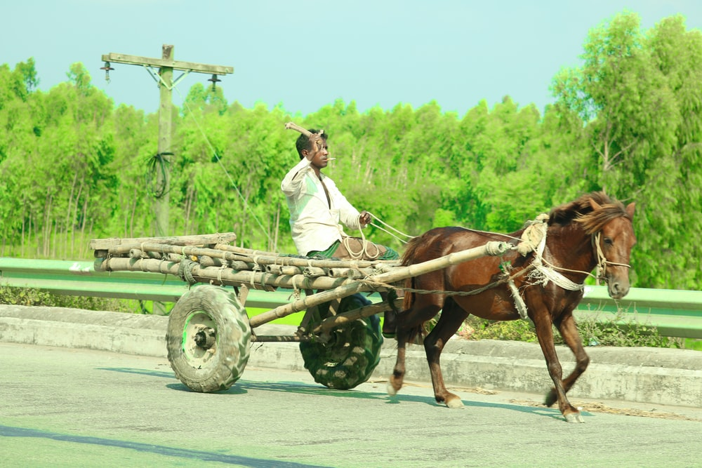 man riding carriage connected to horse