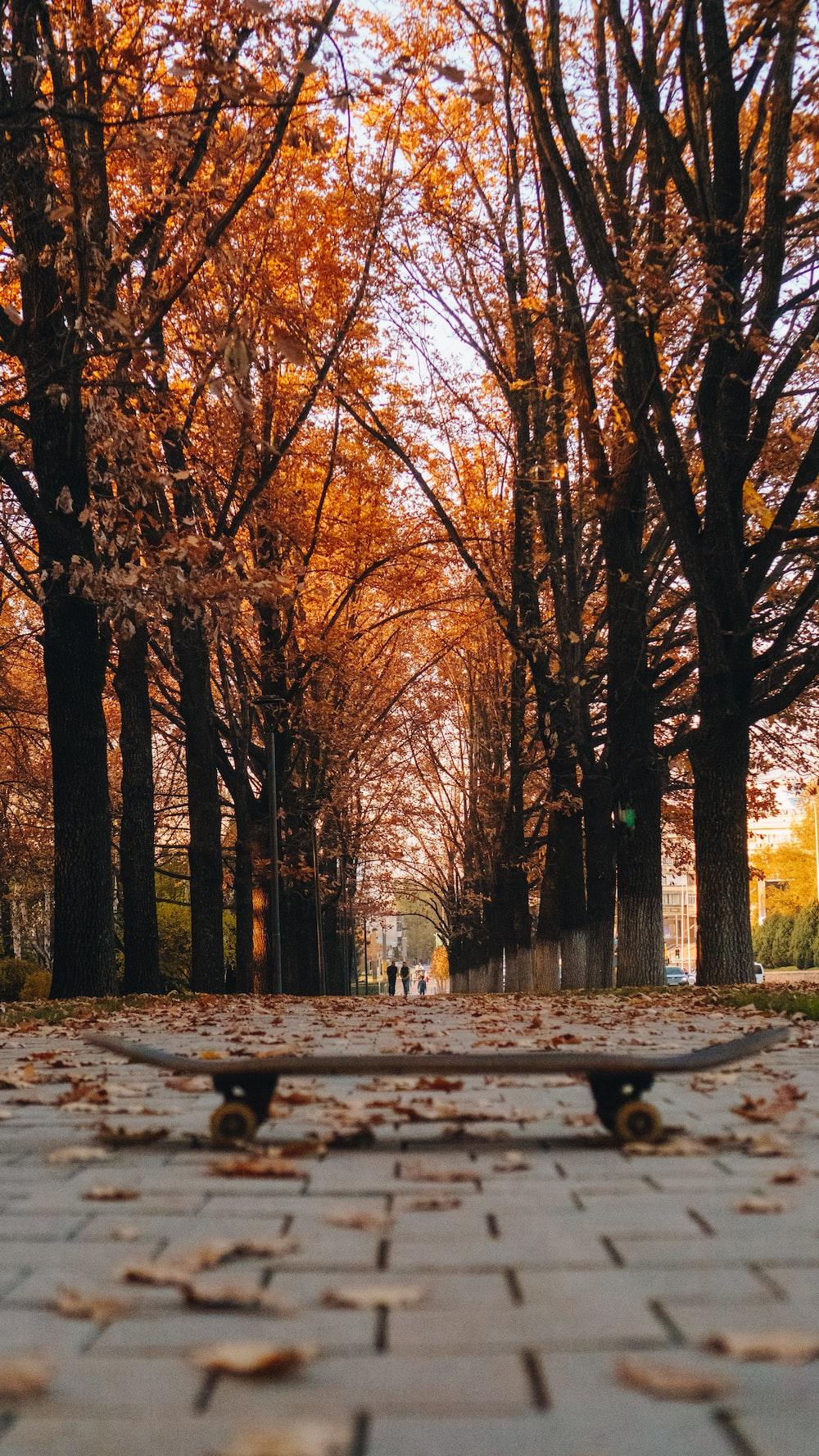 gray and black skateboard photo across orange-leafed trees