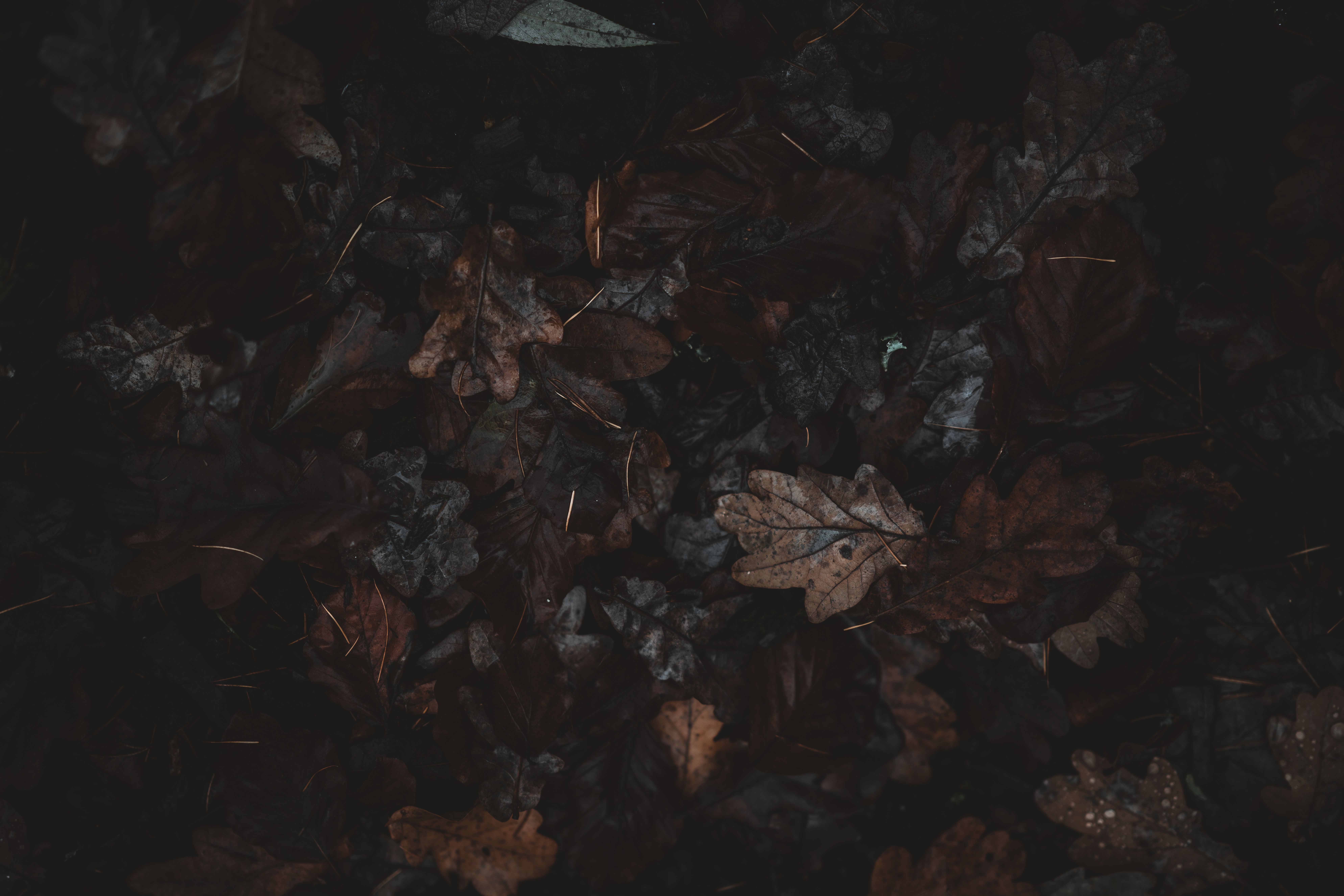black and brown floral textile
