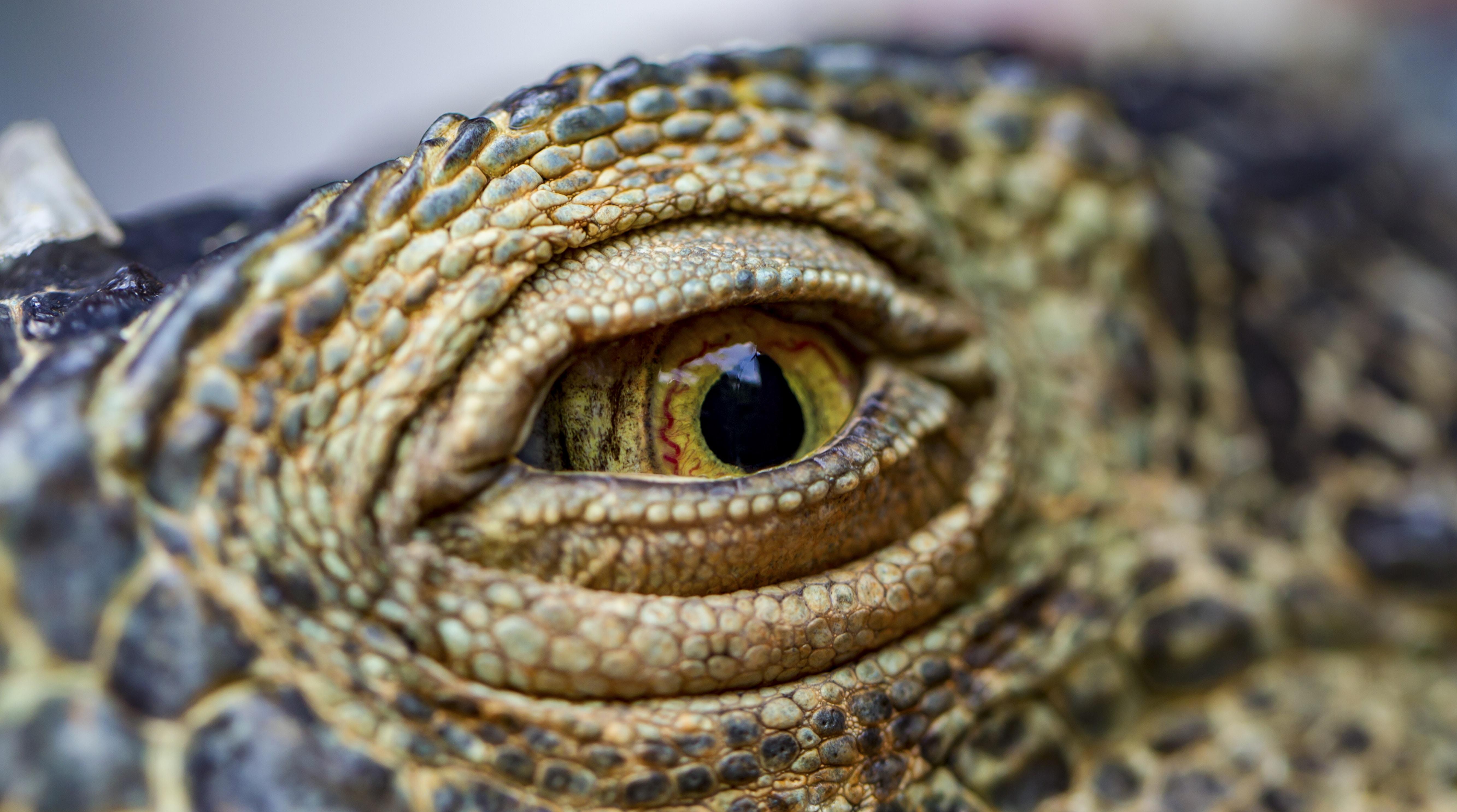 selective focus photo of crocodile eye