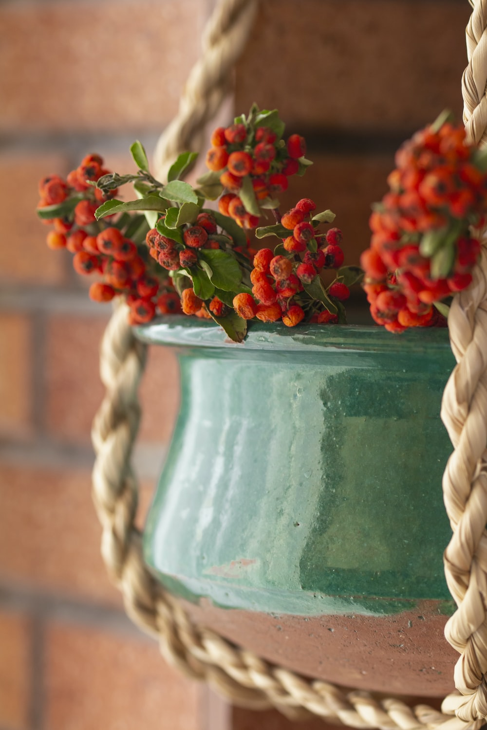 red flowers in pot