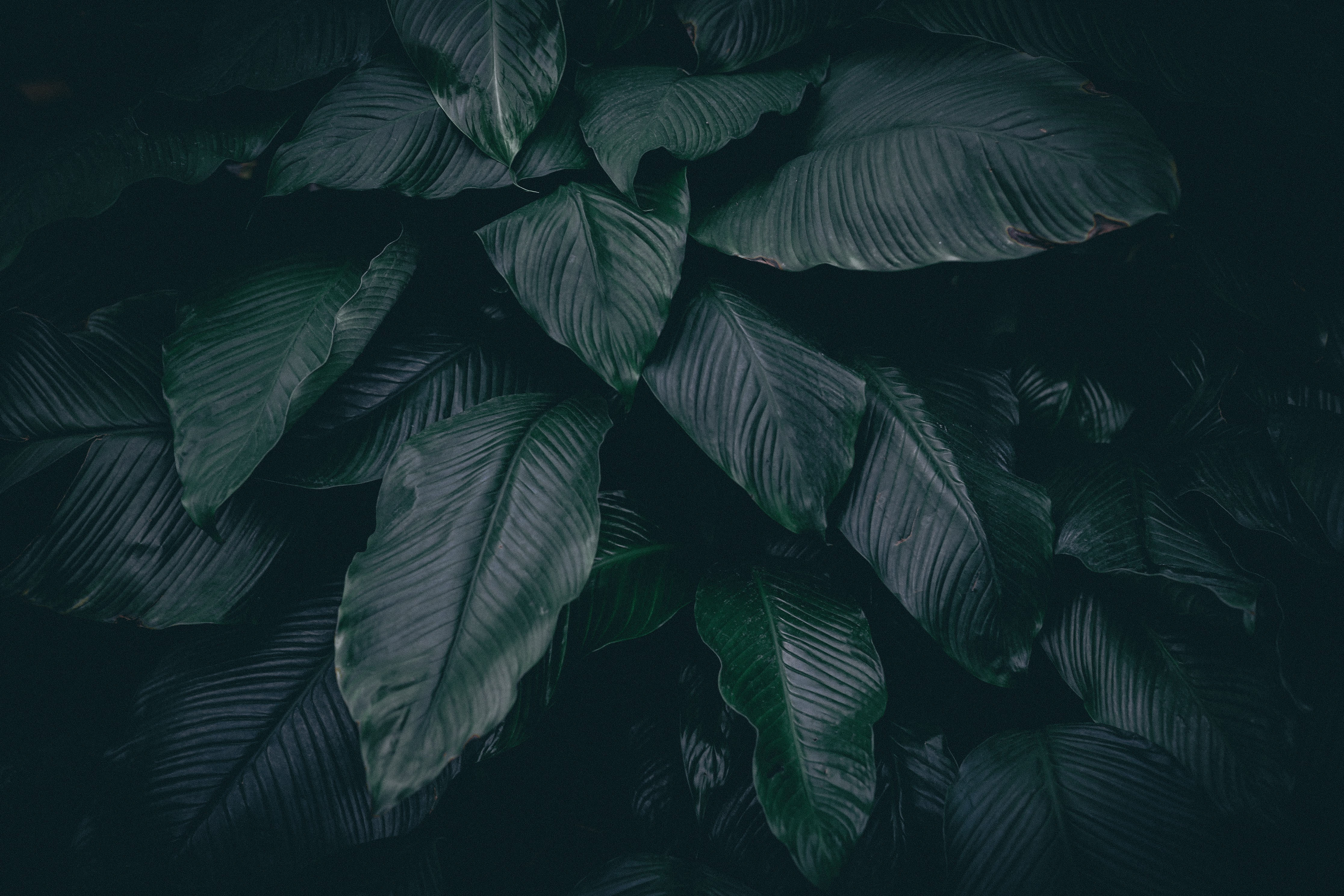 green leafed-plant