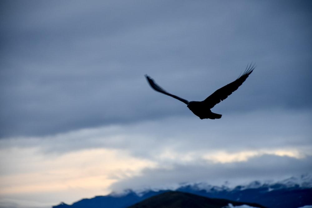 silhouette of birds of prey during golden hour