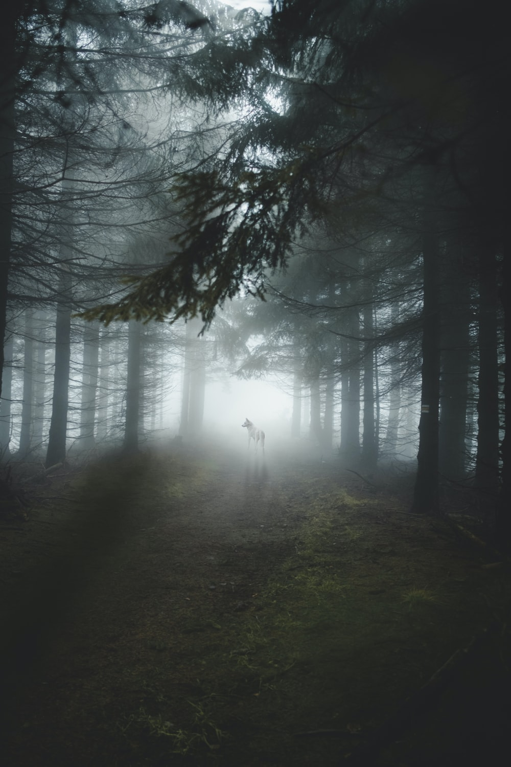 dogs in middle of tall trees during foggy weather