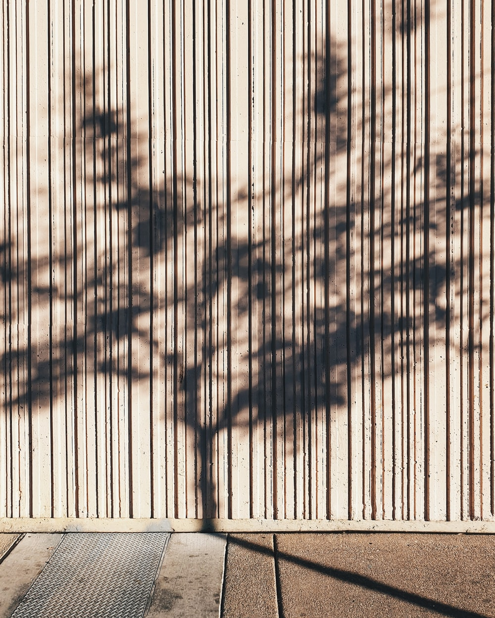 reflection of tree on wall