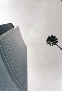 high-rise building near tree