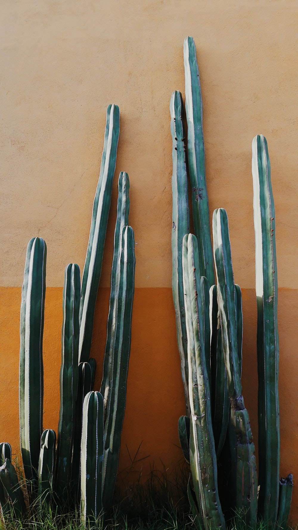 four blue and black wooden handled tools