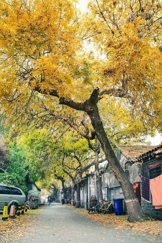 tree beside house